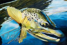 """Above The Rim"" Colored pencil drawing of a German Brown Trout by Travis J.Sylvester.  Reference photo courtesy of ""Bryan Huskey"""