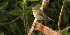 Rare bird draws tourists to Queen's Park | canada.com