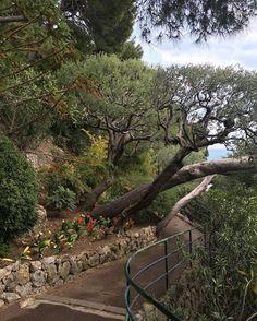 #Rocher  #monaco #montecarlo #jardin #turistando #krautscheidreisen #krautscheid #amoviajar by lilianeklatt from #Montecarlo #Monaco