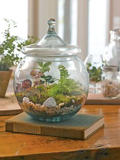 Terrarium Supplies: DIY Terrarium Kit | Gardener's Supply