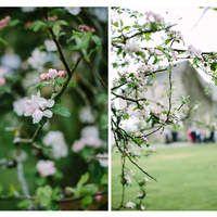 May wedding at CJH all photos by Teresa Ahearne