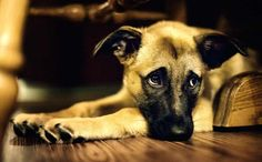 5 Fool-Proof Remedies For Your Dog's Heartbreaking Separation Anxiety