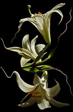 Trippy Madonna Lily ~ Dr. Didi Baev - via: djferreira224: - Imgend