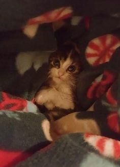 Friend's new kitty keeping warm http://ift.tt/2gCFUsr