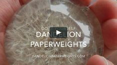The making of a dandelion paperweight... Amazon (FREE Shipping) Amazon.com/dp/B00OETHCUO/Dandelion-Paperweights Buy a dandelion paperweight at www.DandelionPaperweights.com…