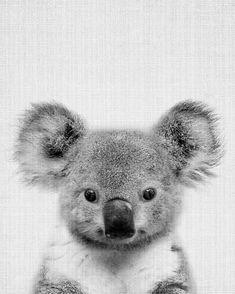 Print 67 by Lila x Lola as Poster Cute Baby Animals, Animals And Pets, Funny Animals, Koala Baby, Australian Animals, Tier Fotos, Mundo Animal, Animal Kingdom, Animals Beautiful