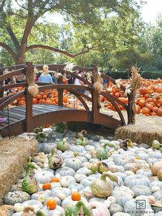 Come see what pumpkins looks like! Fall at the Dallas Arboretum is a magical sight and full of amazing pumpkin displays! Fall Pumpkins, Halloween Pumpkins, Fall Halloween, Pumpkin House, Pumpkin Art, Thistle Farms, Pumpkin Display, Dallas Arboretum, Tennessee Vacation