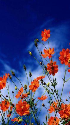 flowers wallpaper by - 10 - Free on ZEDGE™ Flower Wallpaper, Nature Wallpaper, Wallpaper Backgrounds, Unique Wallpaper, Spring Flowers, Wild Flowers, Beautiful Flowers Wallpapers, Flower Aesthetic, Flower Pictures
