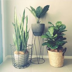 Potted plants for added interest in select locations? More