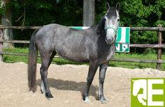 cheval à la location.