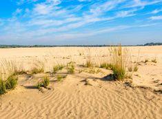 Fietsroute Nationaal Park Loonse en Drunense duinen | Fietsen123 Vineyard, Beach, Om, Outdoor, Outdoors, The Beach, Vine Yard, Beaches, Vineyard Vines