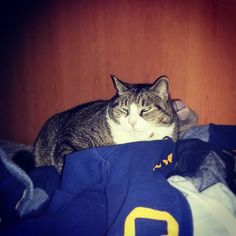 #gattone #cat #gatto #miao #instacat #cats #love #ciccione #catsofinstagram #meow #micione #pet #gattidiinstagram #picoftheday #relax #cute #catoftheday #catlovers #animal #mylovelycat #kitty #catstagram #猫 #ねこ #gato #neko #ネコ #siesta #sleep #naplucorio942016/03/07 04:56:45