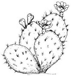 sketches of texas cactus flowers - - Yahoo Image Search Results