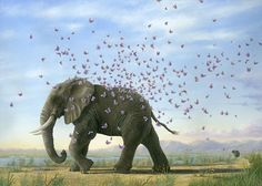 luck elephant with magical butterflies