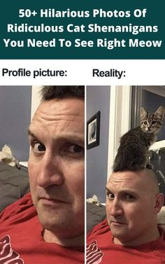just sit back, relax, and enjoy the next few minutes looking at the most hysterical cat photos that you've seen in your entire life.