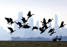 'Wake-up call': Chicago set to break 73-year-old snowless record (Photo: AP)