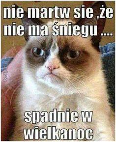 #śmieszne #memy #humor #zima #śnieg #kot
