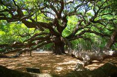 10 U.S. Cities Perfect for a Weekend Getaway Charleston, South Carolina