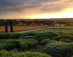McLaren Vale wineries, fine beaches and great walks in nearby Onkaparinga River National Park, South Australia - just a day trip from Adelaide