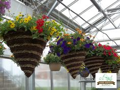 Beautiful cone hanging baskets, planted and grown on our farm!