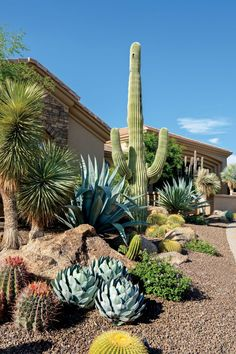Desert landscaping is different than other styles of landscape designs because it requires the use of desert plants. Succulent Landscaping, Front Yard Landscaping, Succulents Garden, Cactus Garden Ideas, Outdoor Cactus Garden, Arizona Landscaping, Driveway Landscaping, Landscape Design, Garden Design