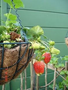 Hanging strawberry baskets!  How wonderful to be able to be out on the porch and pick strawberries! =)  #CountryLiving  #DreamPorch  @Elizabeth Cassinos Living Magazine  @DreamPorch