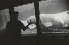 Garry Winogrand | New York Aquarium, Coney Island | The Met