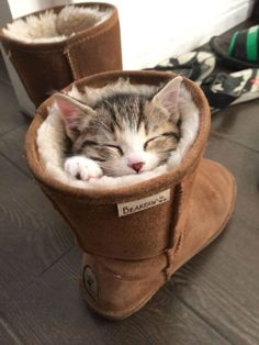 "Yeah, These Aren't Quite ""Ugg"" Boots by DP&F via Cute Overload ~ Sweet Dreams beautiful friends ♥"