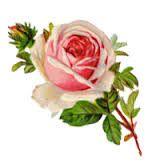 Furniture Decal Image Transfer Vintage French Paris Home Pink Rose Flower Floral Vintage Blume Tattoo, Vintage Flower Tattoo, Tattoo Vintage, Victorian Flowers, Vintage Flowers, Vintage Floral, Vintage Christmas Cards, Vintage Cards, Handmade Christmas