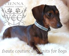 Vienna Couture Canine, Haute Couture and Knitts for dogs #Dachshund #Doxie