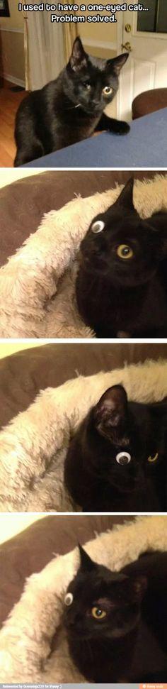 One eyed cat optimism