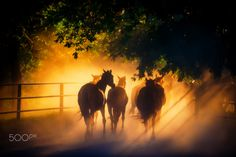 herd of horses - herd of horses back to the pasture in the countryside, English horses