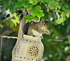 Squirrel Still Photography, Bird Feeders, Squirrel, Outdoor Decor, Home Decor, Squirrels, Decoration Home, Room Decor, Interior Decorating