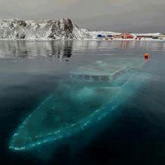 Sunken ship in Antarctica.