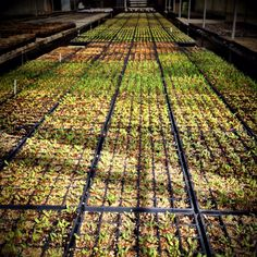 Doesn't take long for our #organicgreenhouses to get 'green'!