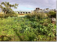 A Permaculture Garden in the Dunes of Portugal - The Permaculture Research Institute (Australia) #areiasdoseixo #permaculture