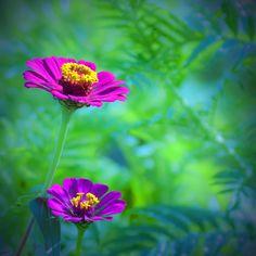 ~~Daybreak by ~silverroses222~~