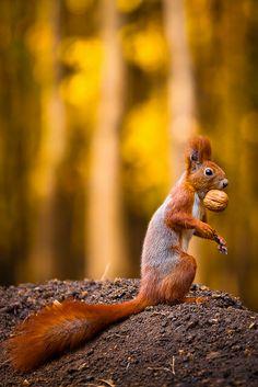 What Nut? by Irene Mei