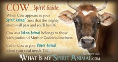 In-depth Cow Symbolism & Cow Meanings! Cow as a Spirit, Totem, & Power Animal. Plus, Cow in Celtic & Native American Symbols & Cow Dreams! Spirit Animal Totem, Animal Spirit Guides, Your Spirit Animal, Animal Totems, Native American Animals, Native American Symbols, American Indians, Animal Meanings, Animal Symbolism