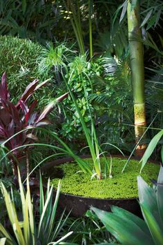 Bali Garden, Balinese Garden, Garden Pond, Garden Landscape Design, Garden Landscaping, Tropical Landscaping, Fast Growing Shade Trees, Container Water Gardens, Container Pond