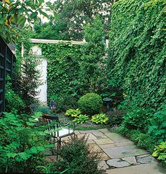 A giant vine-covered wall takes advantage of vertical growing space in this slender patio, where the ground is already planted chockablock with boxwood and hostas. Leaving the fence to the left bare keeps claustrophobia at bay.