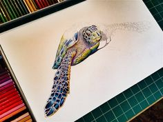 Started A Sea Turtle In Colored Pencil Progress Picture No 1 Visit My Shop