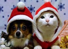 Cani e gatti nel calore di una casa! - http://www.grottaglieinrete.it/it/cani-e-gatti-nel-calore-di-una-casa/ -   affezione, animali, domestici - #Affezione, #Animali, #Domestici