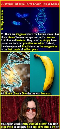 Dna Facts, Wtf Fun Facts, True Facts, Strange Facts, Random Facts, Interesting Facts, Amazing Facts, Interesting History, Dna And Genes