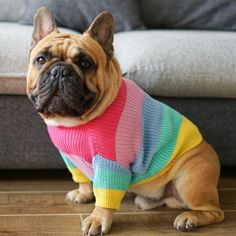 Hot Offer [MPK Dog Clothes] Rainbow Sweater for Dogs French Bulldogs Winter Clothes Dog Knit Dog Sweater, Dog Sweaters, Warm Sweaters, Cãezinhos Bulldog, Bulldog Breeds, Baby Dogs, Pet Dogs, Doggies, French Bulldog Breed