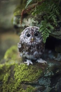 Little owl in the green forest Nature Animals, Animals And Pets, Baby Animals, Cute Animals, Forest Animals, Owl Photos, Owl Pictures, Beautiful Owl, Animals Beautiful
