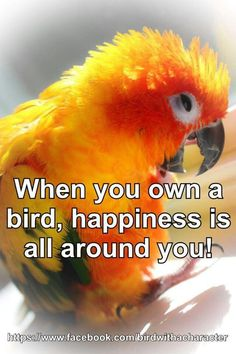 When you own a bird happiness is all around you.even if it's naughty happiness Cute Birds, Pretty Birds, Beautiful Birds, Parrot Quotes, Bird Quotes, Bird Mom, Crazy Bird, Bird Lady, Conure Bird