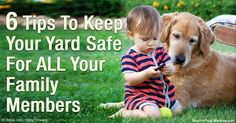Keep your pet safe in your yard by mowing the grass frequently to prevent flea and tick infestations and other outdoor bacteria that might harm them. http://healthypets.mercola.com/sites/healthypets/archive/2016/04/21/safe-yards-for-dogs.aspx
