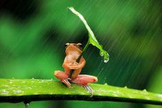 葉っぱの傘をさしているカエルがかわいい。