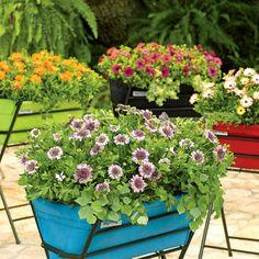 Poppy® Planter